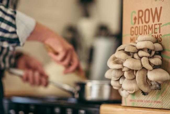Gro-cycle-mushroom-box