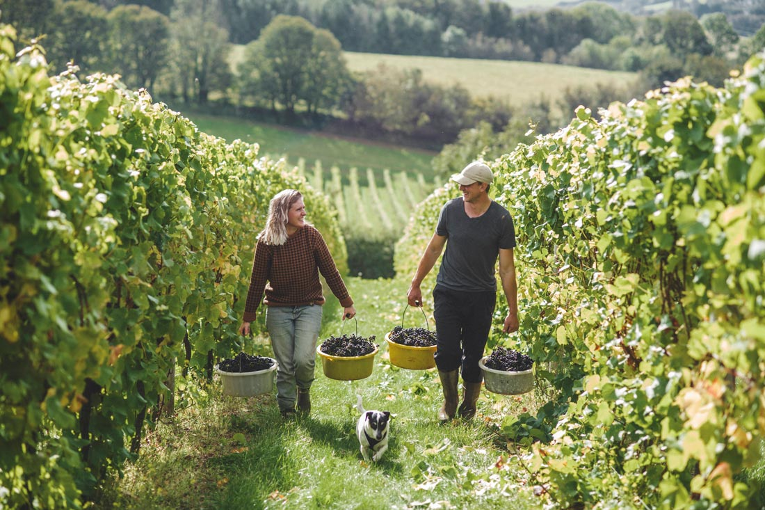 South West wineries Sharpham