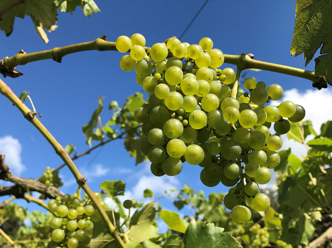 South West wineries - Limeburn Hill