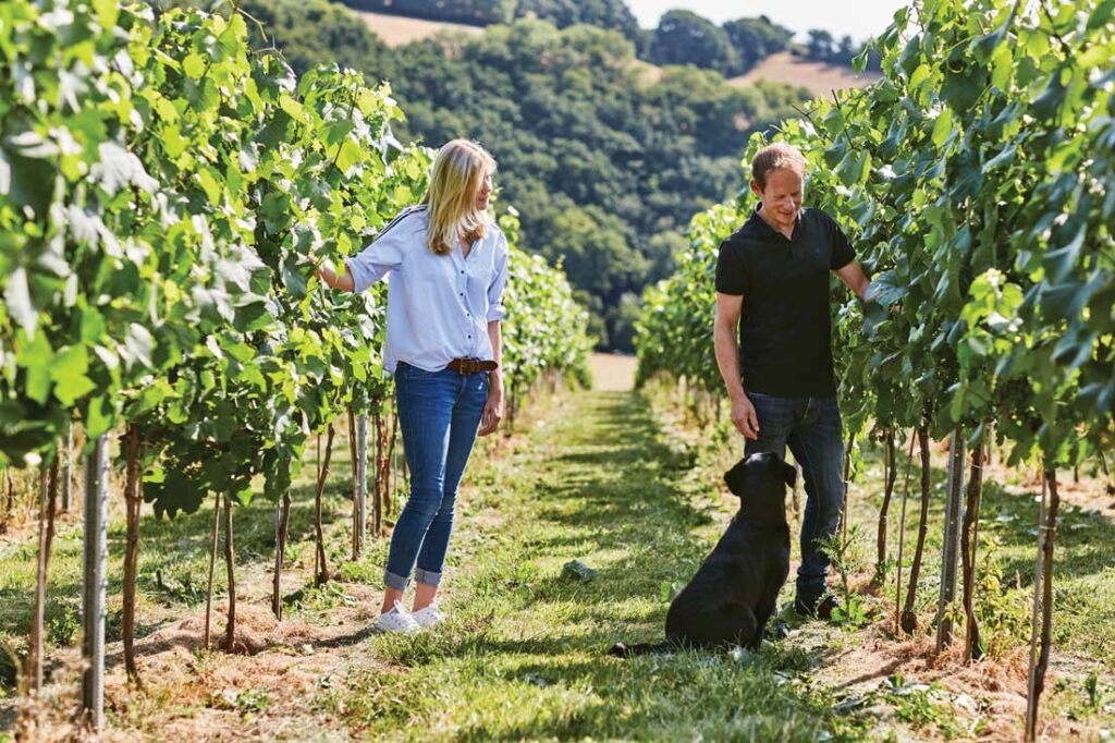 South West wineries - Swanaford Estate
